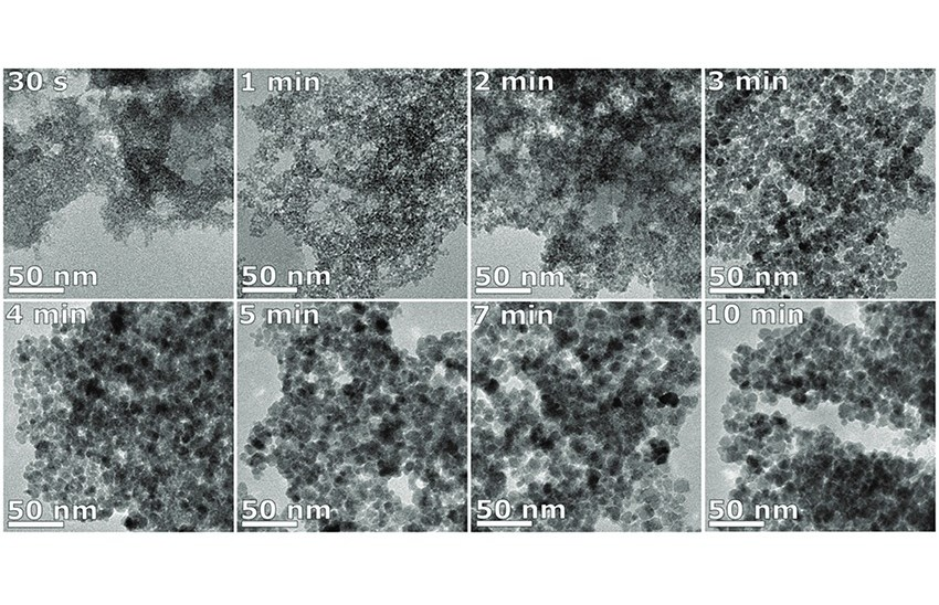 Unravelling the growth mechanism of the coprecipitation of iron oxide nanoparticles