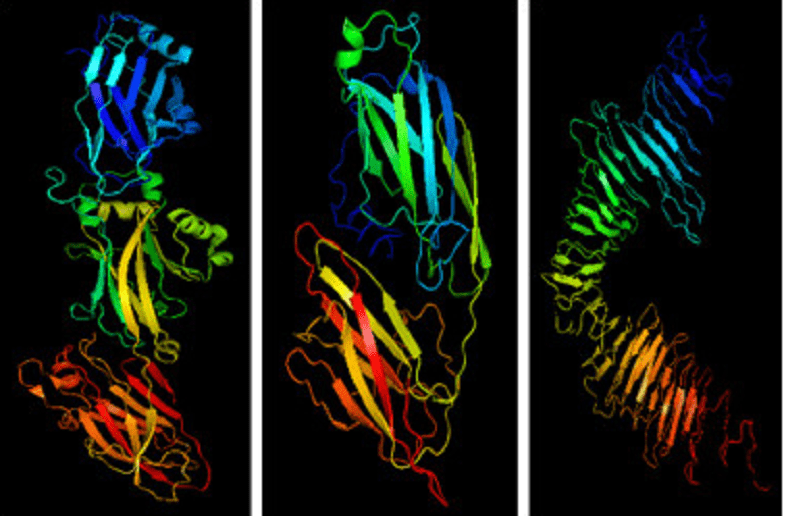 Cross-β Structure – a Core Building Block for Streptococcus mutans Functional Amyloids