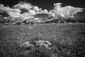 Summer meadows abound with wildflower on the Beartooth plateau, near the top of the Beartooth Pass in northwest Wyoming.