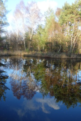 Sapper Pond reflections