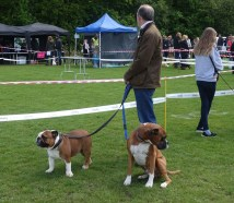 3-Dog show competitors