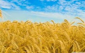 豊かな実りを収穫する by 大天使メタトロン