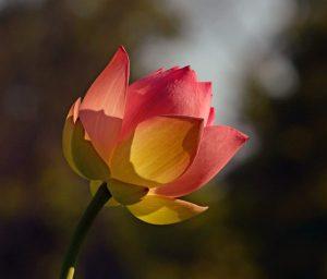 イバラと嵐の中で咲く花 by エンジェルズ