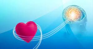 心臓の直観的知性