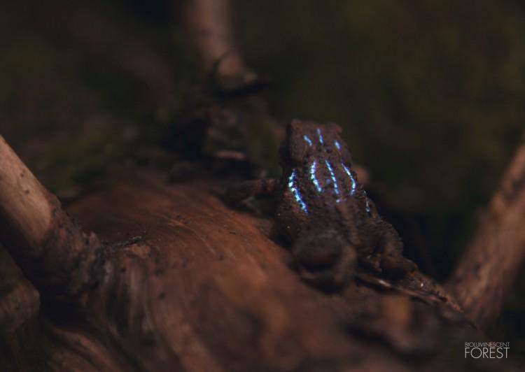 Bio-luminescent Forest - Crapaud