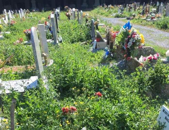 cimitero staglieno erbacce