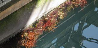 gorgonia Porto Antico