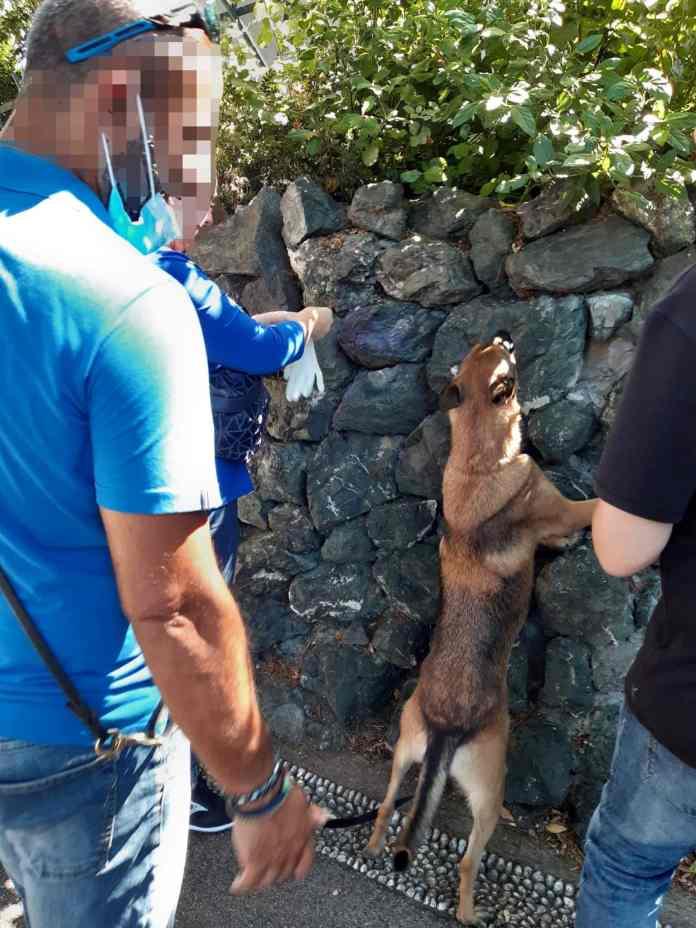 cane antidroga Maqui