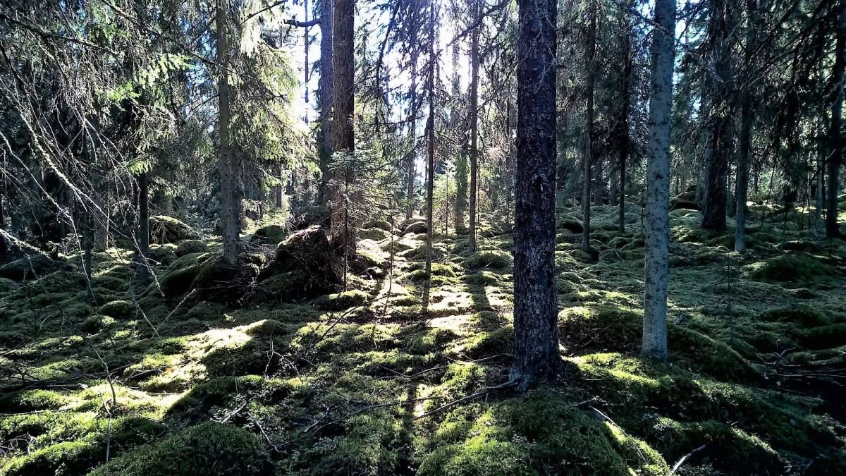 Metsä 08102016
