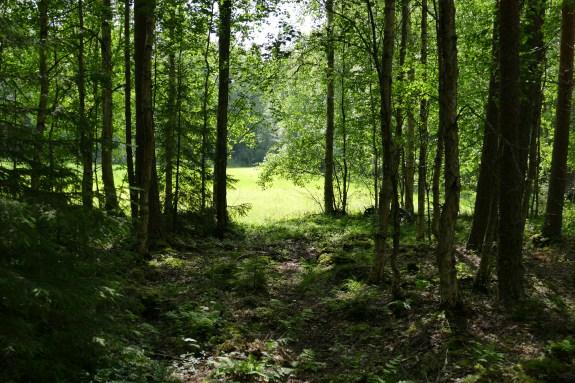 Näkymä metsästä pellolle