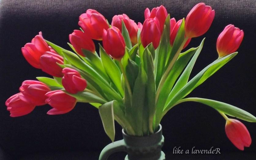tulip2-1