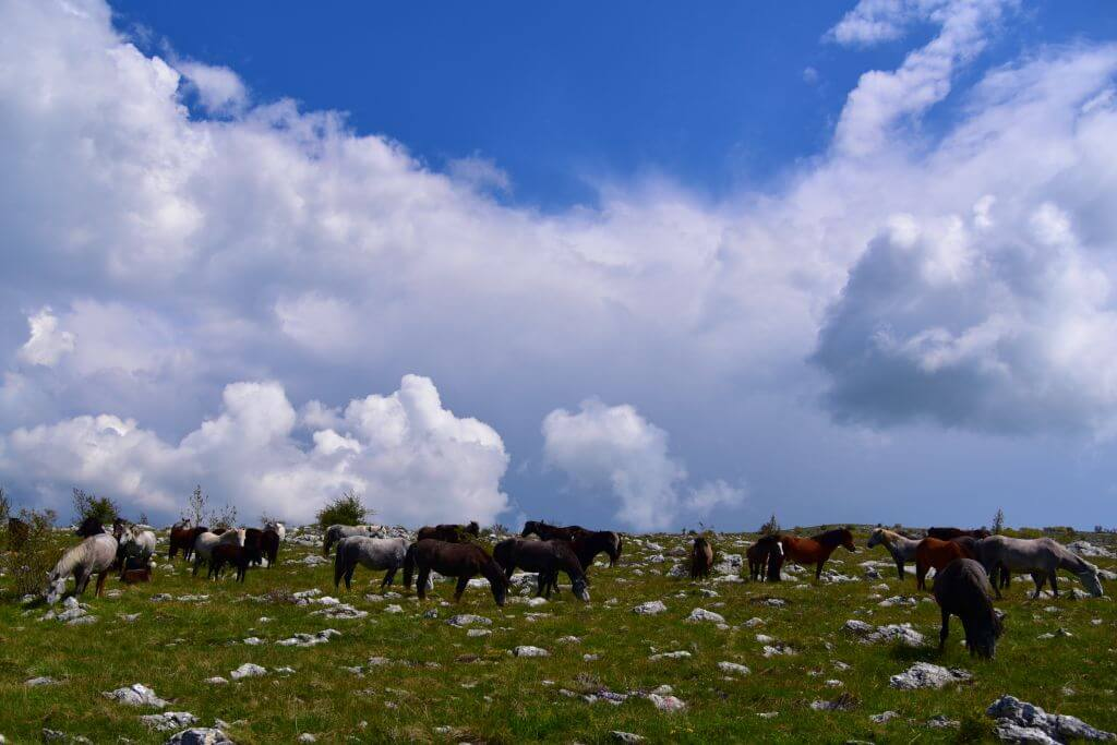 Wild Horses, Things to do in Mostar
