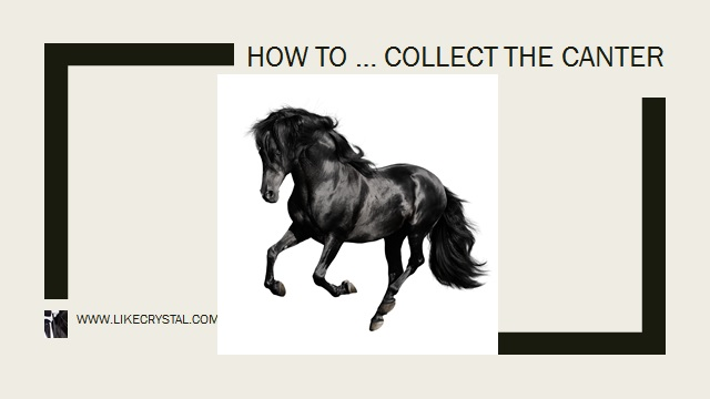 Collected Canter