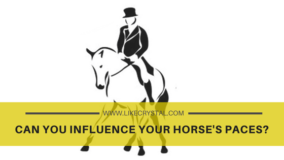 Q6 – Can You Influence Your Horse's Paces