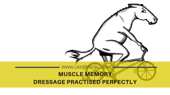 Muscle Memory – Dressage Practised Perfectly