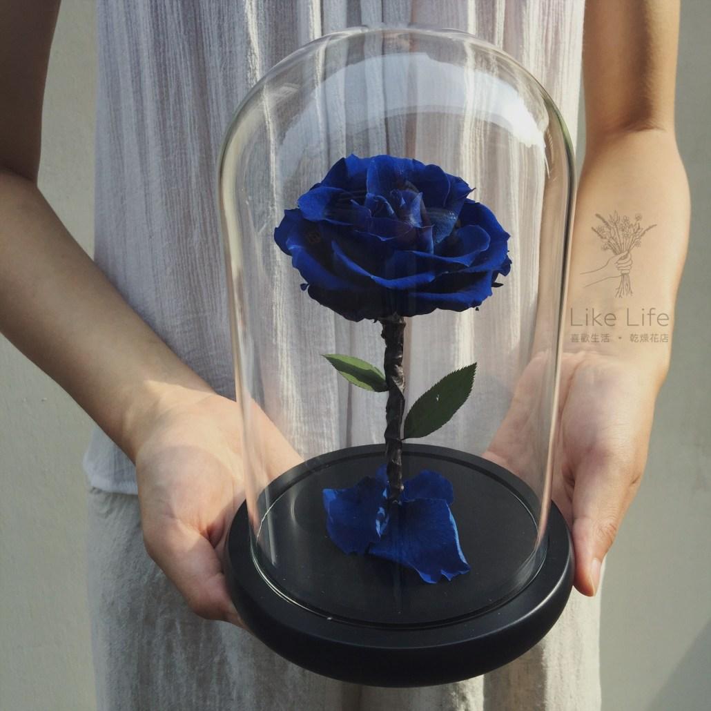 永生玫瑰花玻璃罩寶藍封面