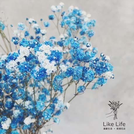 滿天星藍色乾燥花材,台北喜歡生活乾燥花店