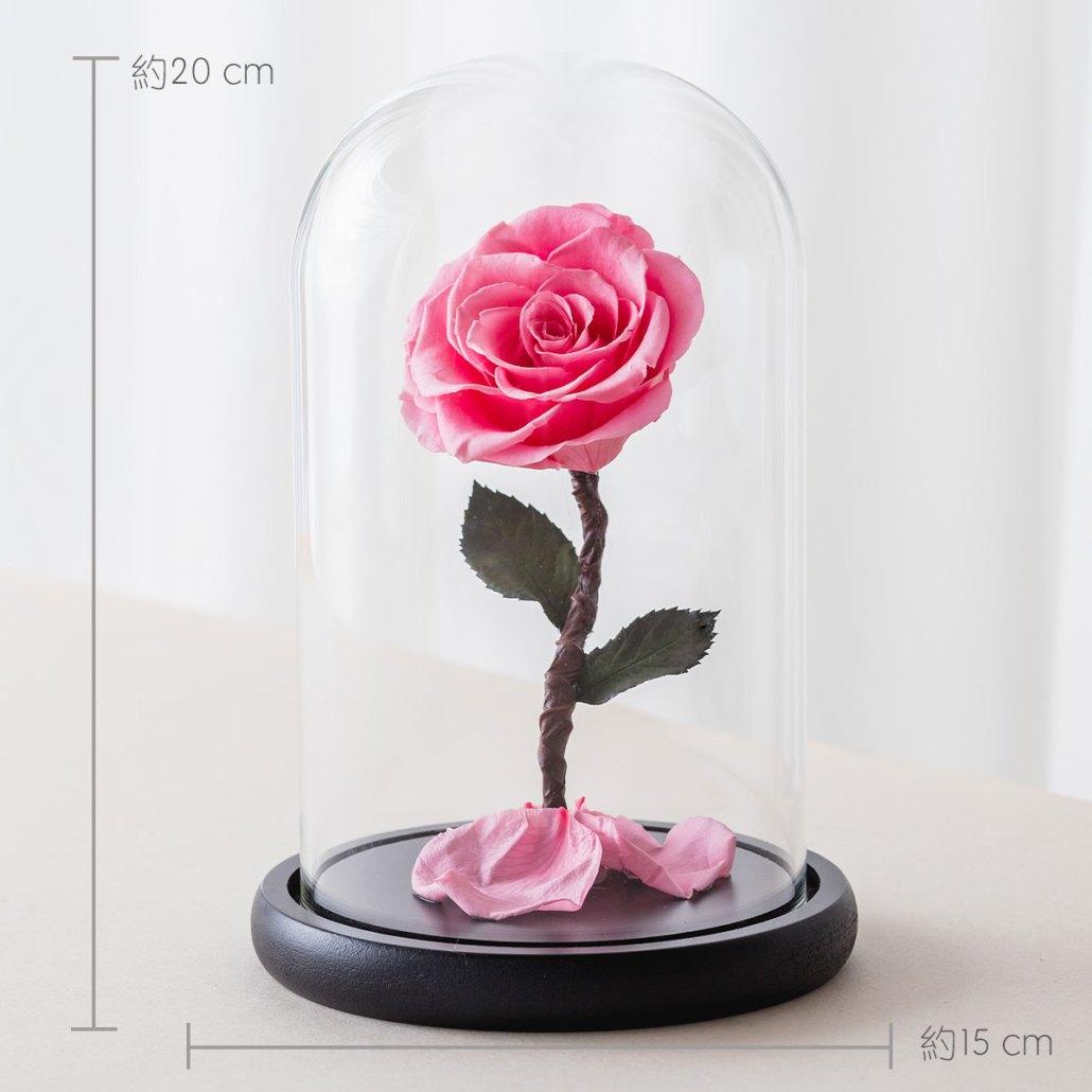 永生花玫瑰,粉色永生花玫瑰公分
