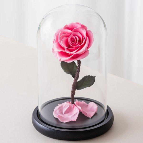永生花玫瑰,粉色永生花玫瑰正版封面