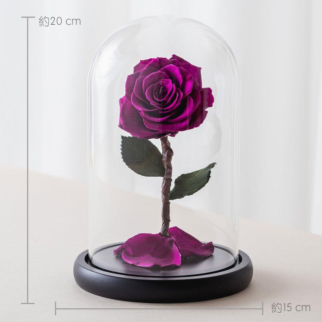 永生花玫瑰,紫色永生花玫瑰公分