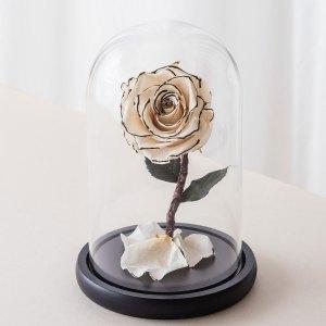 永生花玫瑰花,白色永生花玫瑰正版封面