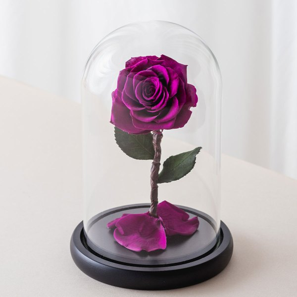 永生花玫瑰花,紫色永生花玫瑰正版封面