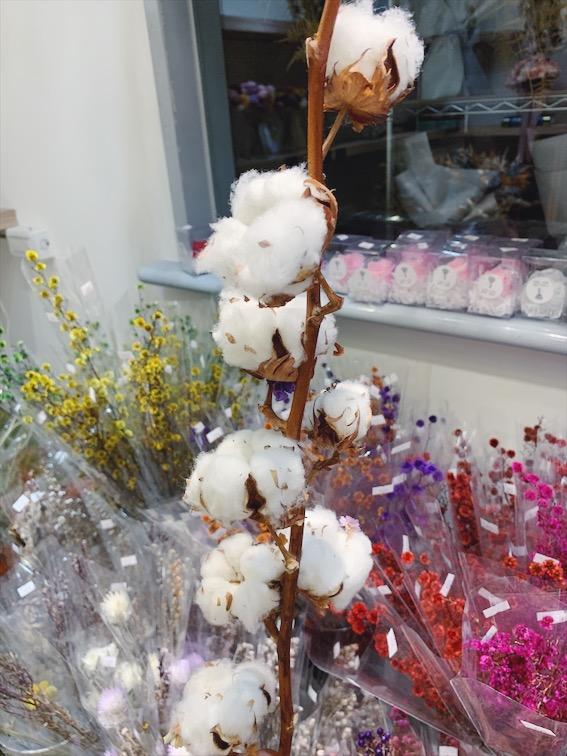 棉花花語,木棉花哪裡買推薦台北,棉花的花語是什麼