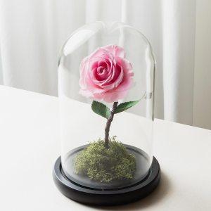 粉紅色永生玫瑰花玻璃罩封面-喜歡生活乾燥花店