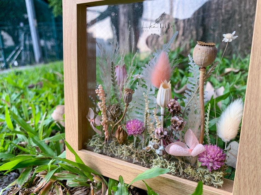 乾燥花植物標本特寫,乾燥花標本