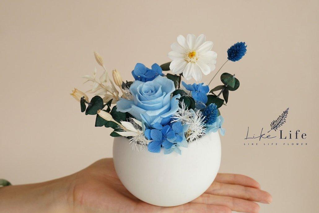 永生花盆栽手拿特寫,淺藍色永生花