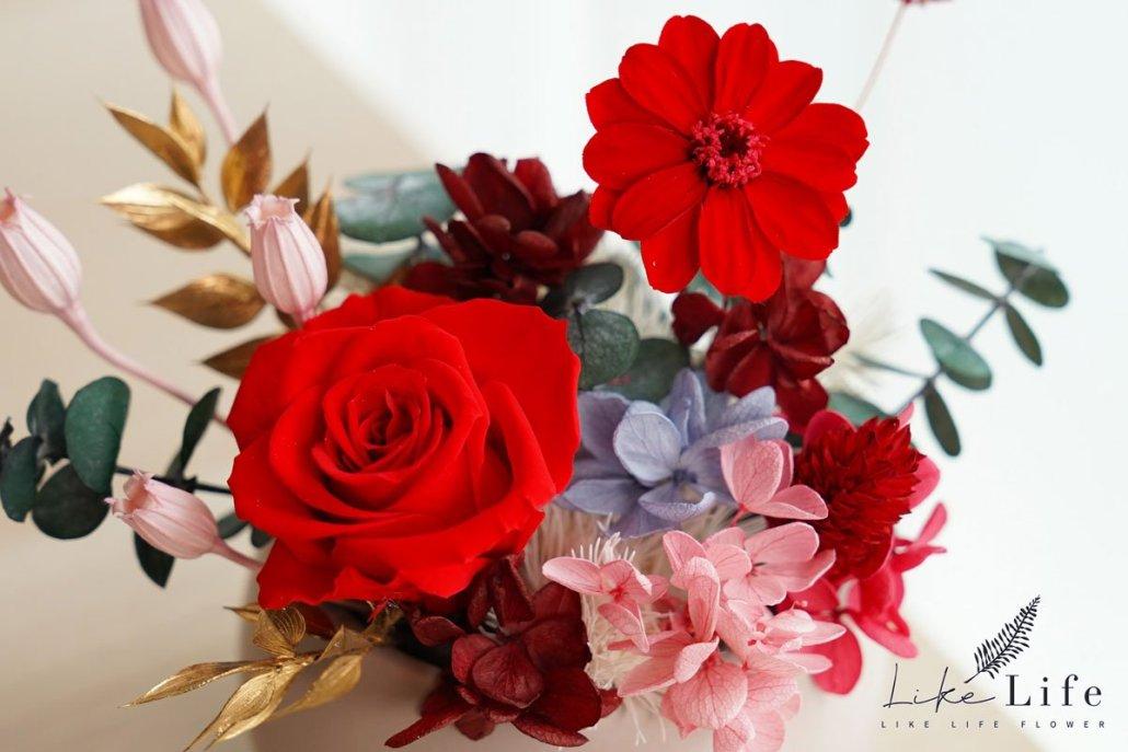 特寫紅色永生花盆栽,永生花特寫紅色