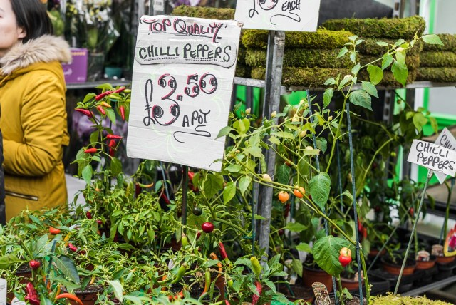 chili peppers red yellow columbia road
