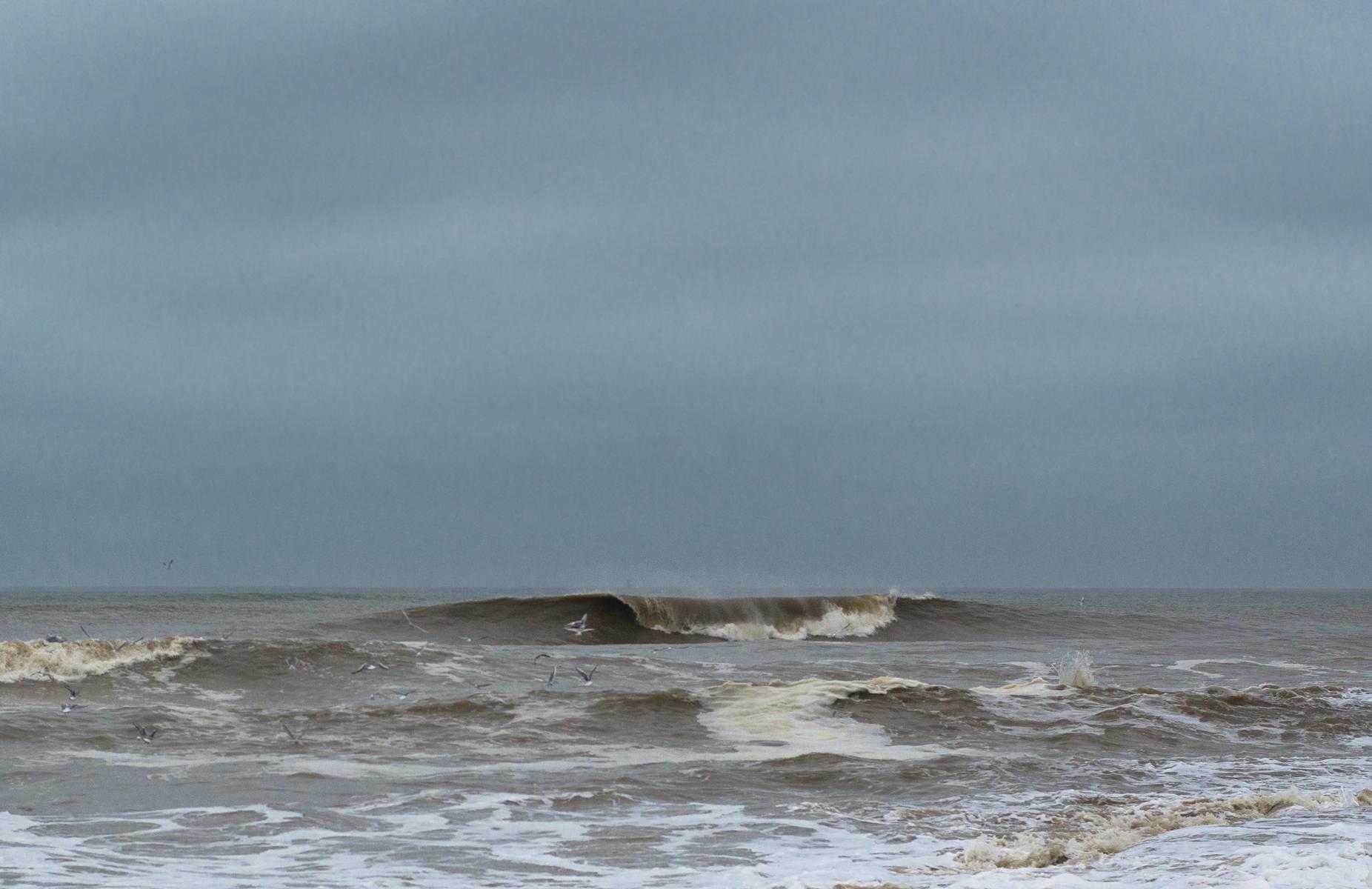 matagorda wave