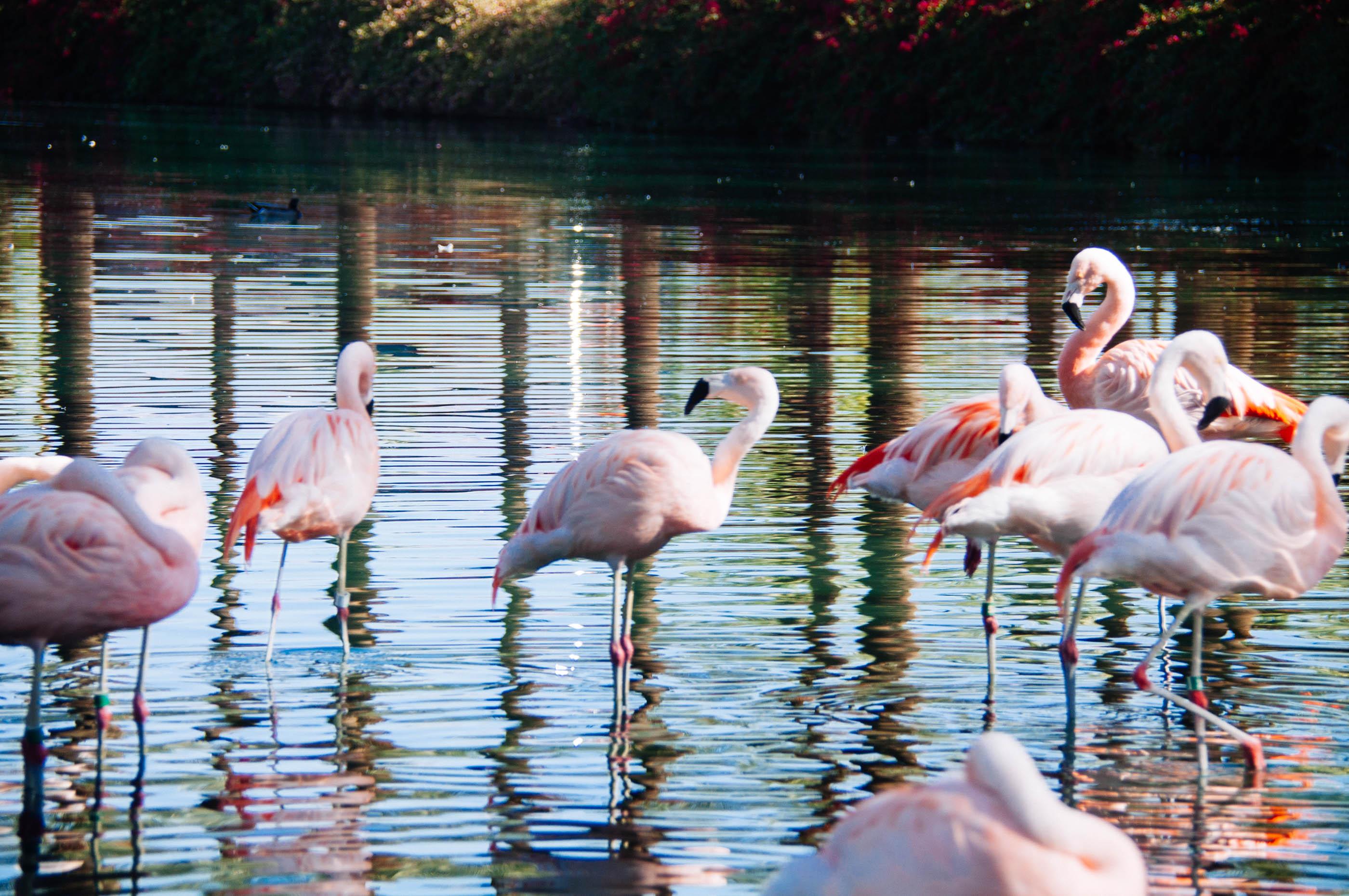 accessorize flamingo