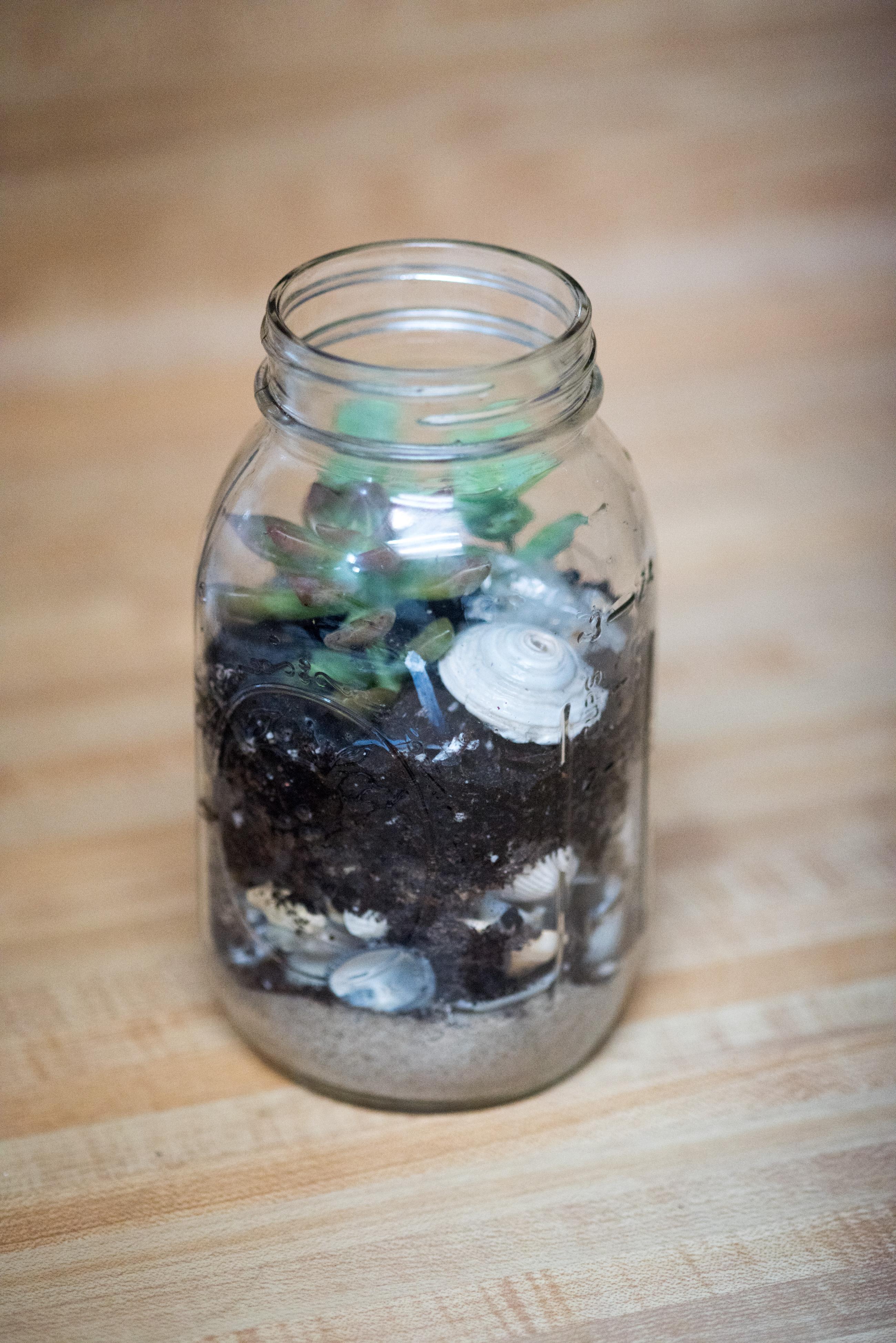 make succulent terrarium