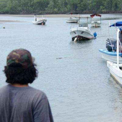 Tamarindo Crocodile: El Pocho? Is That You?