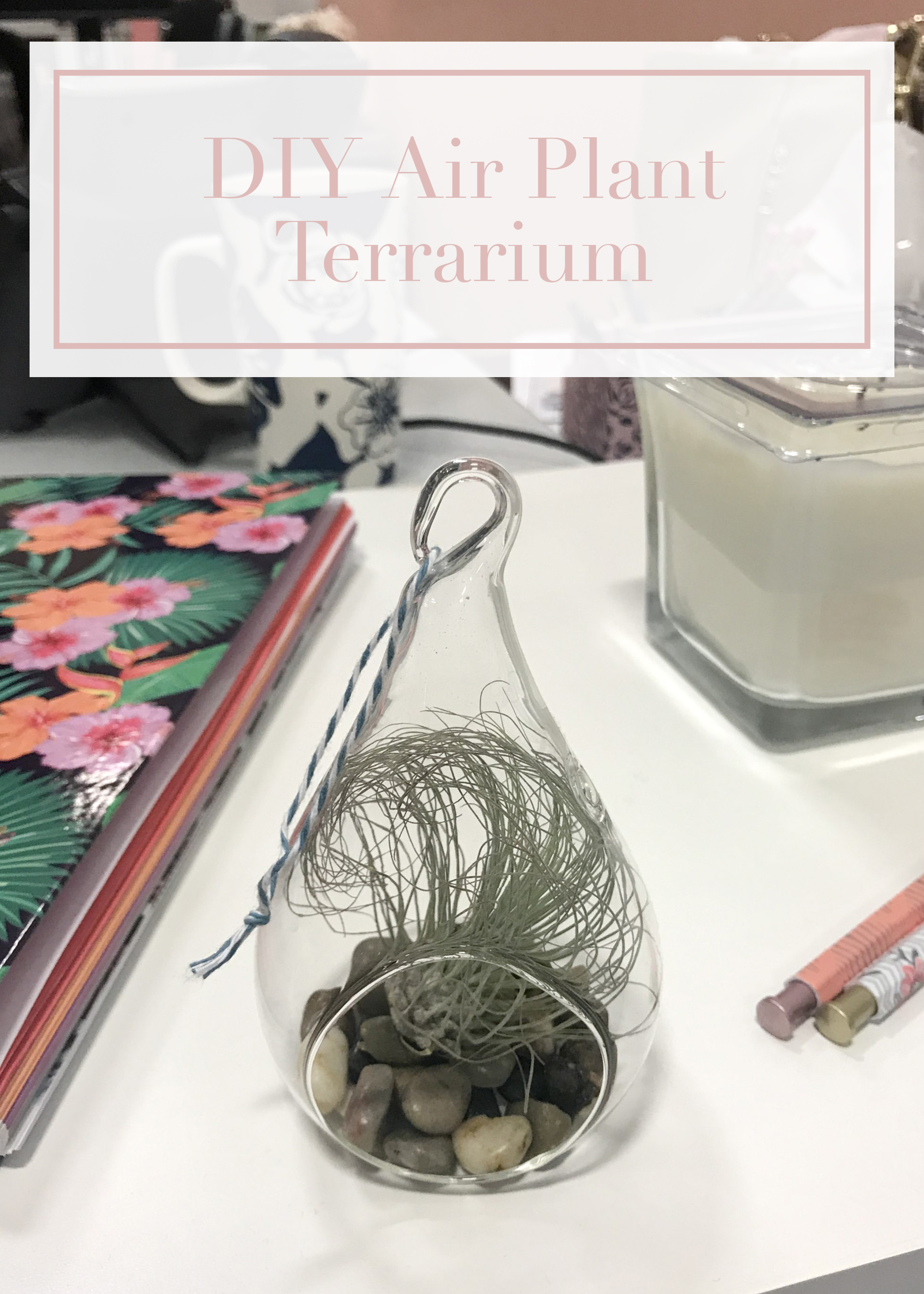 Diy Air Plant Terrarium To Brighten Your Office Desk Likely By Sea