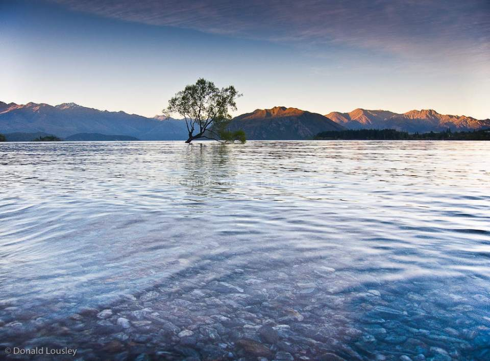 Solitary Tree in lake Wanaka by Donald Lousley.