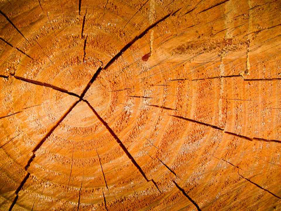 Freshly Sawn Tree Trunk by Donald Lousley.