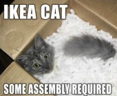 cat-meme-cat-in-box-with-packing-popcorn