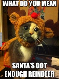 cute-christmas-cat-meme-picture