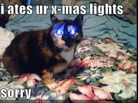 funny-pictures-cat-ate-your-christmas-lights