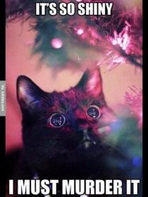 its-so-shiny-christmas-cat-meme