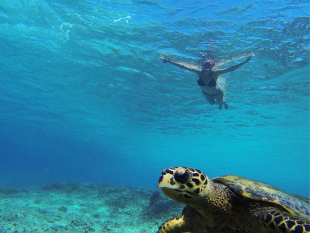 Tartaruga marinha nadando com a gente em Gili Trawangan