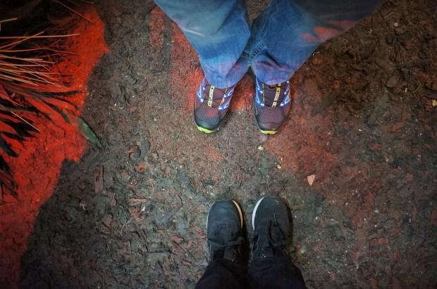 Ao caminhar pela área da floresta dava a sensação de estar em uma. No Aquário de Melbourne