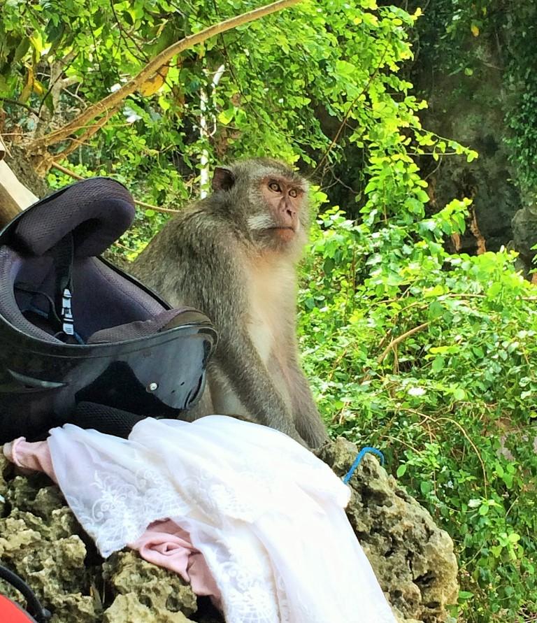 Uluwatu o paraíso dos surfistas - macaco atento