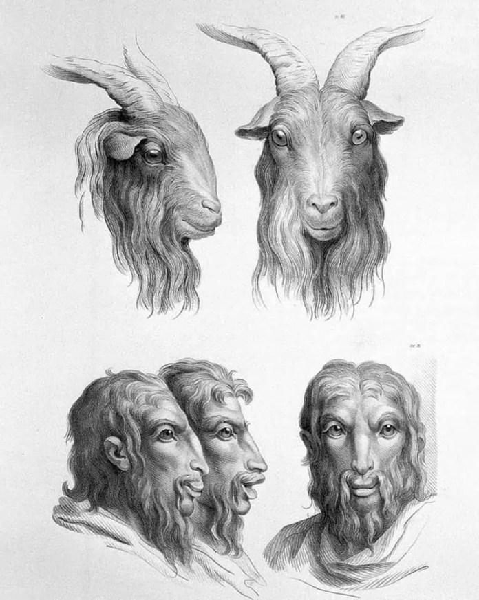 Goat art resembling a human face