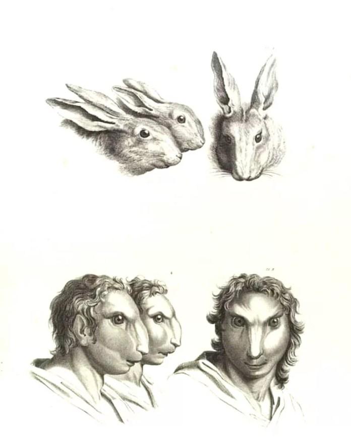 Rabbit art resembling a human face