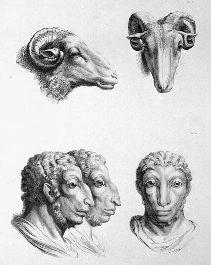 Sheep art resembling a human face