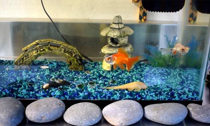 A tank with pet fish